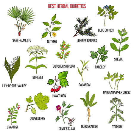 Best diuretic herbs set. Hand drawn vector illustration Vektorgrafik