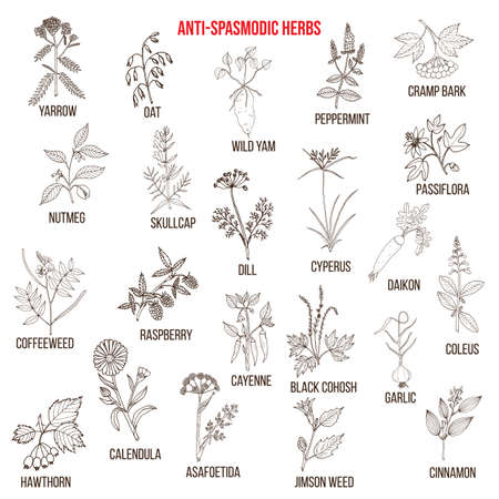 Best antispasmodic herbs collection. Part 2. Hand drawn vector set of medicinal plants