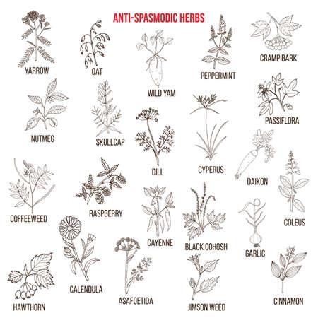 Best antispasmodic herbs collection. Part 2. Hand drawn vector set of medicinal plants Ilustração