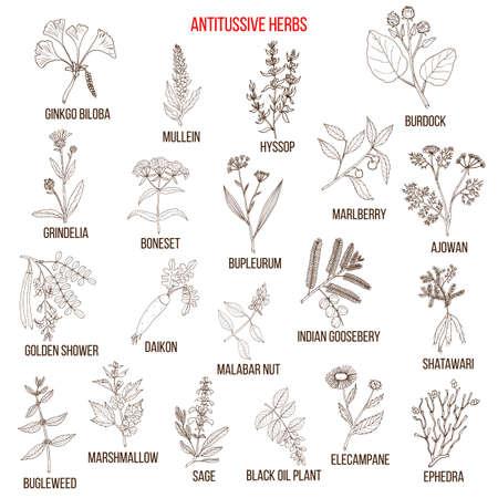 Best antitussive herbs set. Hand drawn vector illustration Vetores