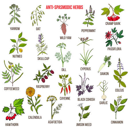 Best antispasmodic herbs collection. Part 2. Hand drawn vector set of medicinal plants Illustration