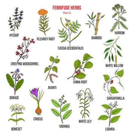 Febrifuge herbs collection. Part 2. Hand drawn vector set of medicinal plants