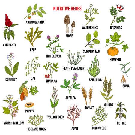 Best nutritive herbs set. Hand drawn vector illustration
