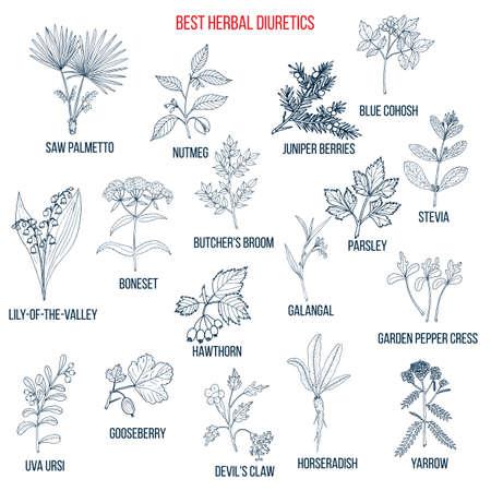 Best diuretic herbs set. Hand drawn vector illustration Ilustração