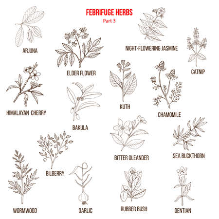 Febrifuge herbs collection. Part 3. Hand drawn vector set of medicinal plants Ilustração