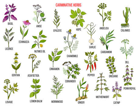 Carminative herbs. Hand drawn vector set of medicinal plants Ilustração