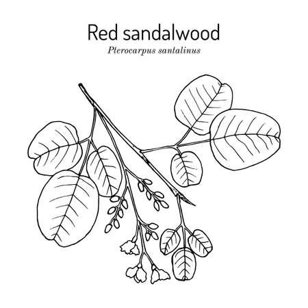Red sandalwood Pterocarpus santalinus , medicinal plant Illusztráció