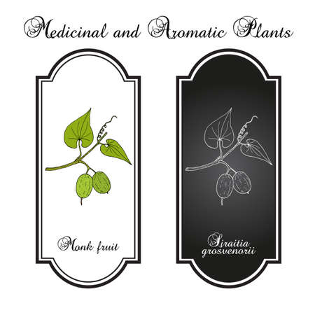 Monk fruit or luo han guo Siraitia grosvenorii , medicinal plant Vectores