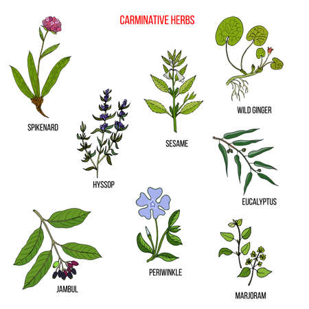 Carminative herbs. Hand drawn vector set