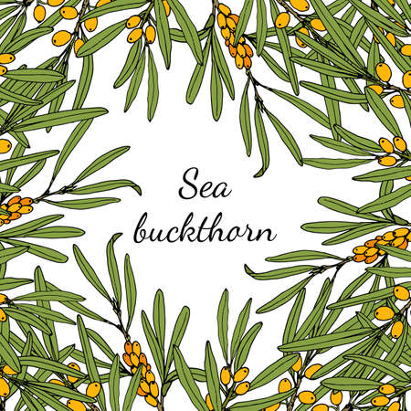 Sea buckthorn branches with berries and leaves