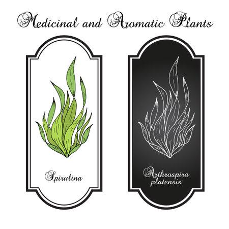 Spirulina arthrospira platensis , edible and medicinal seaweed