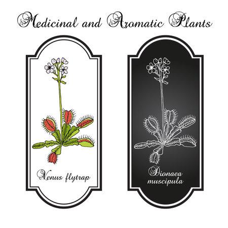 Venus flytrap Dionaea muscipula, medicinal plant. Иллюстрация