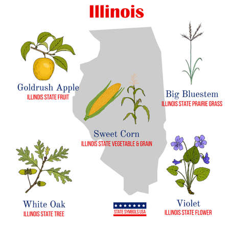 Illinois. Set of USA official state symbols