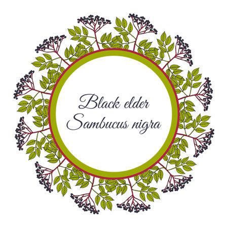 Wreath of european black elderberry Иллюстрация