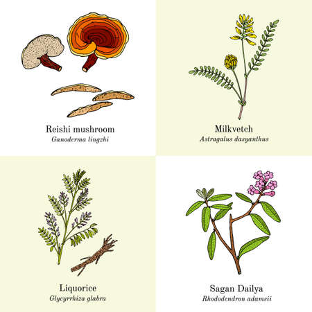 Set of adaptogenic medicinal plants