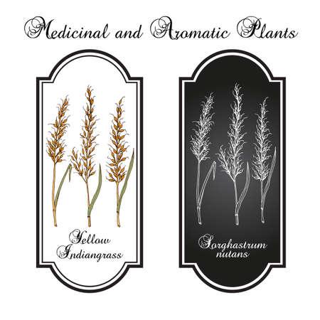 Yellow Indiangrass Sorghastrum nutans , prairie grass