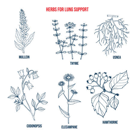 Set of best herbs for lung support