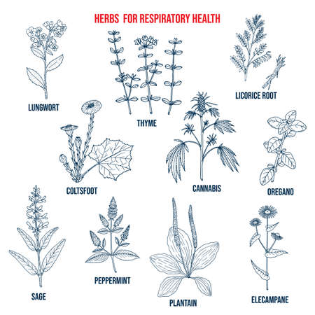 Set of best herbs for lung support and respiratory health