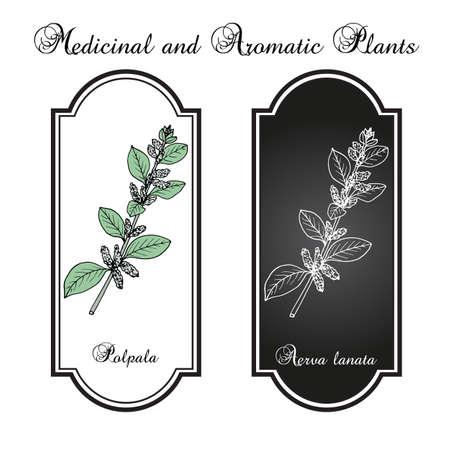 Polpala Aerva lanata, or mountain knotgrass, medicinal plant