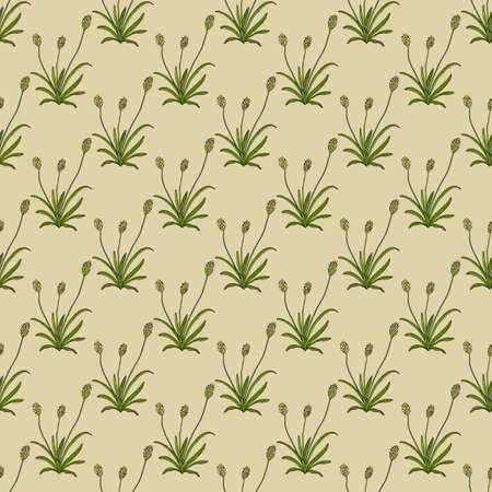 Seamless pattern with blond plantain, medicinal plant Illustration