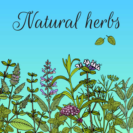 Floral background with hand drawn aromatic garden herbs