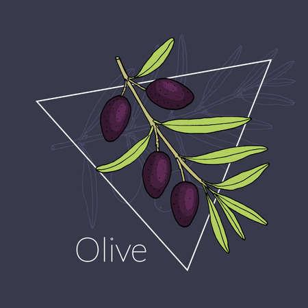 Olive Branch icon design Illustration