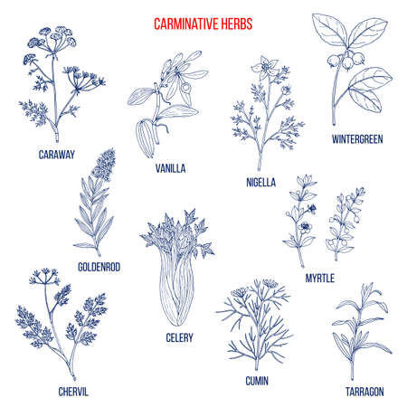 Carminative herbs. Hand drawn vector set