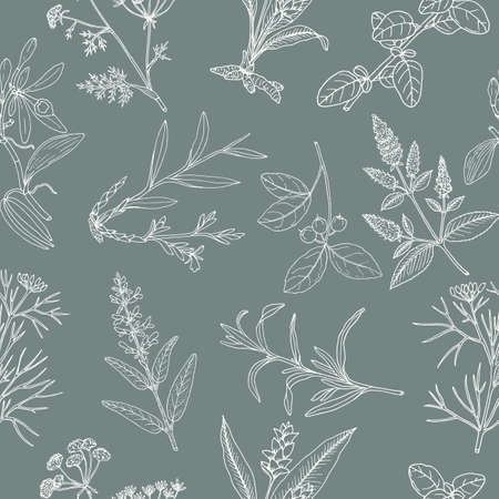 Floral background with hand drawn aromatic garden herbs, seamless pattern