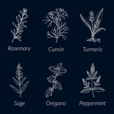 Collection of culinary herbs and spices Illustration