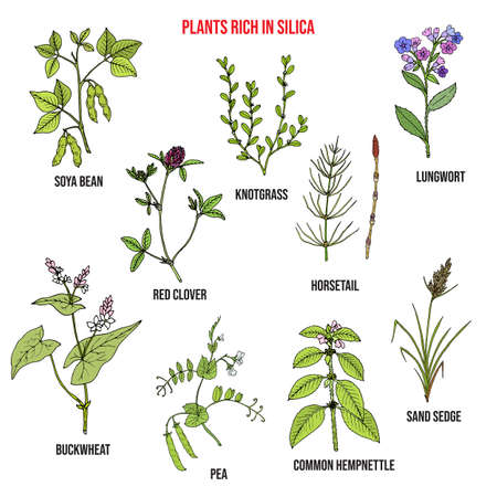 Set of plants rich in silica