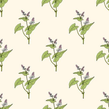Seamless pattern with buckwheat, edible plant