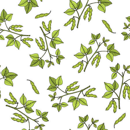 Seamless pattern with soya bean, edible plant