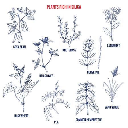 Set of plants rich in silica. Hand drawn vector set Illustration