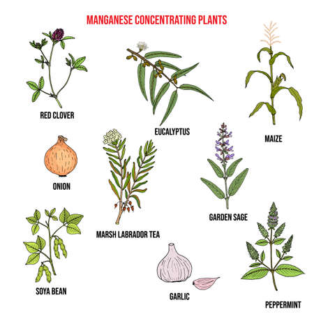 Collection of medicinal plants concentrating manganese.