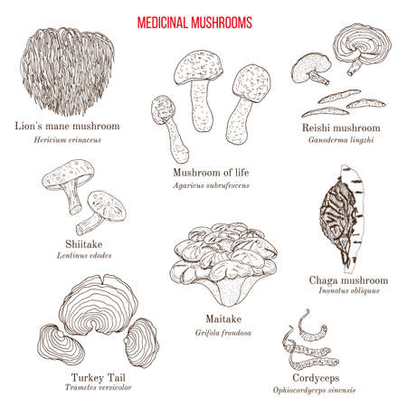 Vector collection of hand drawn medicinal mushrooms, lichens and seaweeds