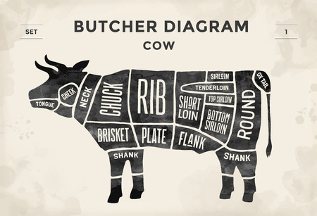 diagrama: Corte del conjunto de la carne de vacuno. Cartel diagrama de carnicero - Vaca. Vintage dibujado a mano tipográfica. ilustración vectorial