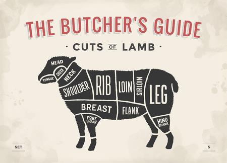 Corte de set de carne. Cartel Diagrama y esquema del carnicero - cordero. Vintage tipográfico a mano. Ilustración del vector Ilustración de vector