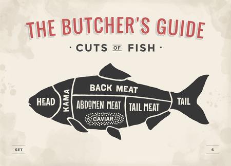 Corte del conjunto de la carne. Cartel diagrama de carnicero y el esquema - Fish. Vintage dibujado a mano tipográfica. ilustración vectorial Ilustración de vector
