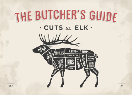Cut of meat set. Poster Butcher diagram, scheme of Elk. Vintage typographic hand-drawn elk silhouette for butcher shop, restaurant menu, graphic design. Meat theme Illustration.
