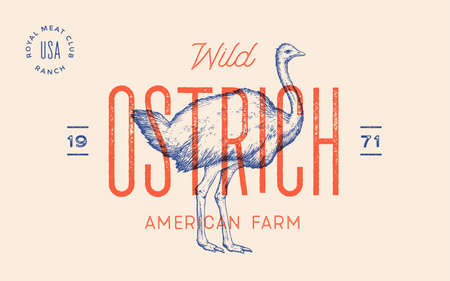 Ostrich. Template Label. Vintage retro print, tag, label with ostrich drawn, engraved old school style. Poster for Butchery meat shop with text, typography, ostrich silhouette. Vector Illustration 向量圖像