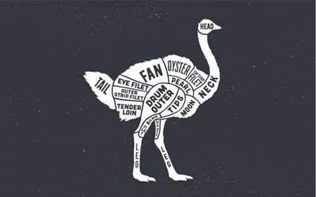 Ostrich. Butcher guide scheme. Ostrich Chart. Ostrich silhouette, chalk, blackboard. Poster for Butchery meat shop, Restaurant menu, Kitchen wall design, typography. Vector Illustration 向量圖像