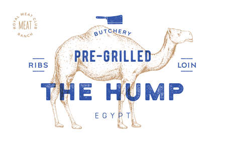 Camel, dromedary. Template Label. Vintage retro print, tag, label with camel drawing, engraved old school style. Poster for Butchery meat shop, text, typography, camel silhouette. Vector Illustration