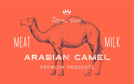 Camel, dromedary. Template Label. Vintage retro print, tag, label with camel drawing, engraved old school style. Poster for Butchery shop with text, typography, camel silhouette. Vector Illustration