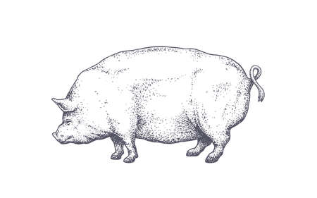 Pork, pig. Vintage retro print, silhouette pig