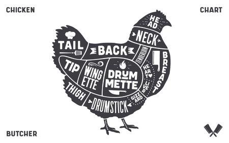 Chicken, hen. Scheme, diagram, chart chicken butcher guide