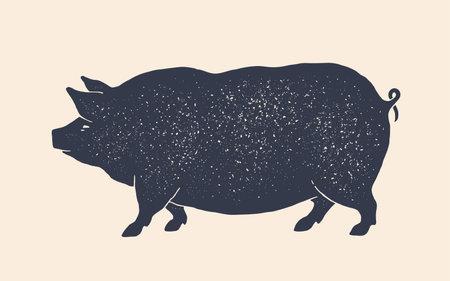 Pork, pig. Vintage retro print, black white pig drawing, grunge old school style. 向量圖像