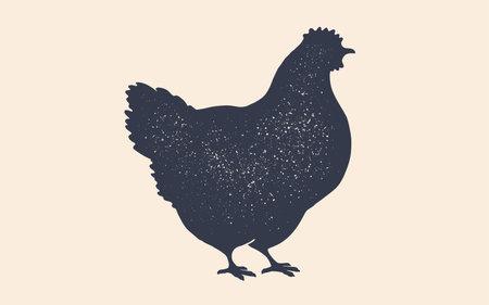 Hen, chicken. Isolated black silhouette hen 向量圖像