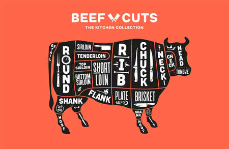 Cow, beef. Scheme, diagram, chart beef, butcher guide. Poster for kicthen or bar wall design. Vintage retro print, art typography with cow drawing, old school style. Vector Illustration
