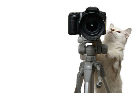 Funny beige cat is photographer with DSLR camera on tripod. Isolated on white background