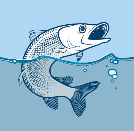Illustration of predator fish that is jumping from the water. Çizim